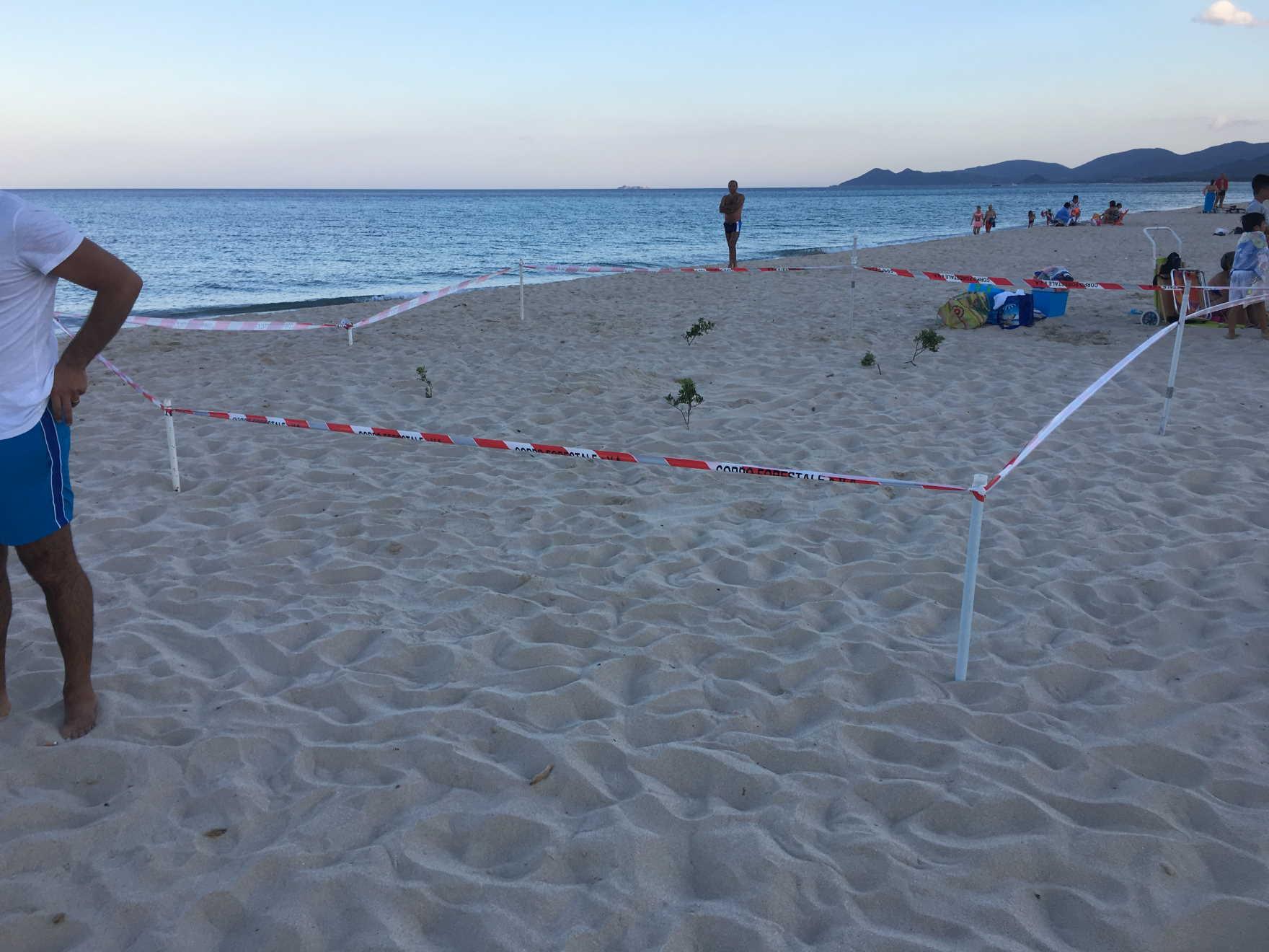 La caretta caretta non dimentica muravera uova a piscina rei sardegna - Spiaggia piscina rei ...