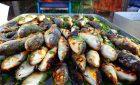 Muggini in salamoia, cozze e vino: a Muravera la seconda edizione del Vermentino fish fest